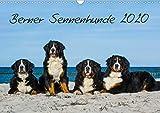 Berner Sennenhund 2020 (Wandkalender 2020 DIN A3 quer)