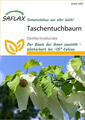 Saflax 12957 Taschentuchbaum (Taschentuchbaumsamen)