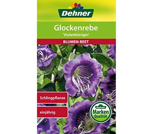 Dehner Blumen-Saatgut, Glockenrebe