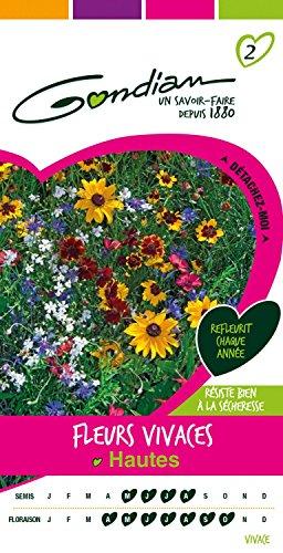 Gondian 165120 CP 2 Semences Fleurs Vivaces Hautes Multicolore 1 x 8,1 x 16 cm