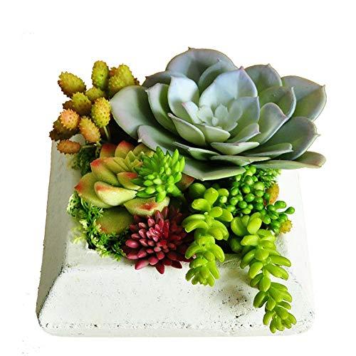 Yw-Flower Künstliche gemischte Sukkulente, Mini ungetopfte Sukkulenten Dekor stammt Bulk sortierte Picks Indoor Wand Garten DIY Dekorationen