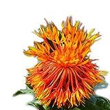 Mymotto 10pcs / pack mini semi di cartamo fiore semi di fiori da giardino Fiori