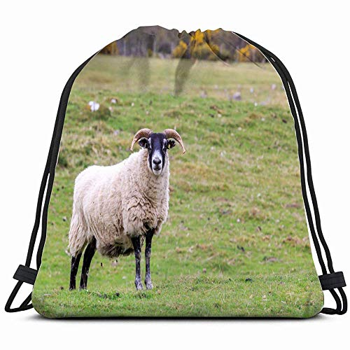 Ccsoixu Scottish Blackface Sheep Standing Meadow Animals Wildlife Agriculture Nature Drawstring Backpack Sports Gym Bag for Women Men Children Large Size with Zipper and Water Bottle Mesh Pockets