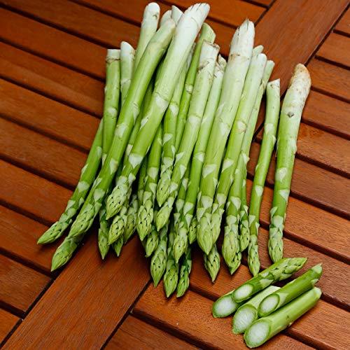 Sharpy 50 Pcs Spargel Samen, Gemüsesamen Garten