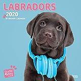Labradors - Labrador Retriever 2020: Original Myrna-Kalender [Mehrsprachig] [Kalender] (Wall-Kalender)