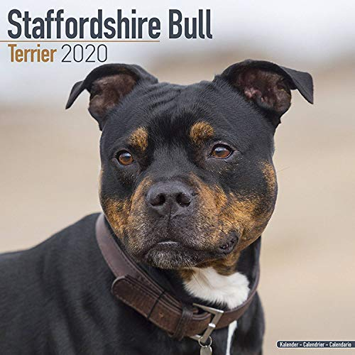 Staffordshire Bull Terrier Calendar 2020