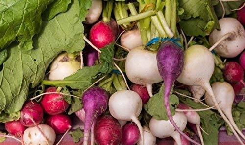 Home Garden - Miscela di varieta di ravanelli - per coltivazioni indoor e balconate - semi