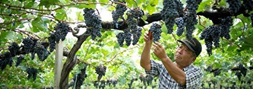 『日本ワイン サントリー 塩尻ワイナリー 塩尻マスカット・ベーリーA [] 750ml』の4枚目の画像