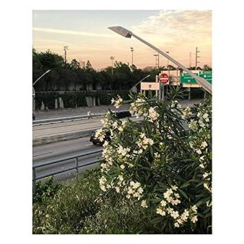 Alone in Houston, Vol. 2
