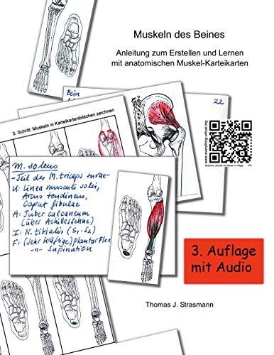 Muskeln des Beines: Anleitung zum Erstellen und Lernen mit anatomischen Muskel-Karteikarten