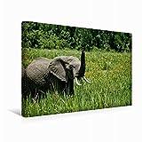CALVENDO Lienzo de 45 cm x 30 cm Horizontal, un Motivo del Calendario de Elefantes Wildlife en Kenia, Imagen sobre Bastidor, Imagen Lista para Usar. Una Experiencia Maravillosa (Animales