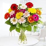 Blumenstrauß Bunte Gerbera mit 7-Tage-Frischegarantie , von Hand gebunden, versandkostenfrei bestellen