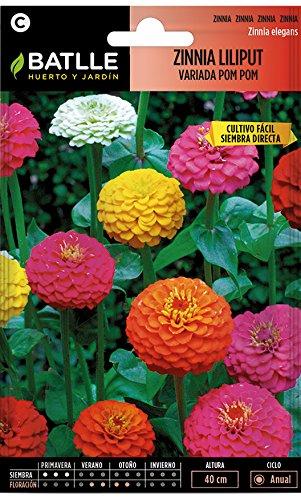 Semillas de Flores - Zinnia Liliput variada Pom Pom - Batlle