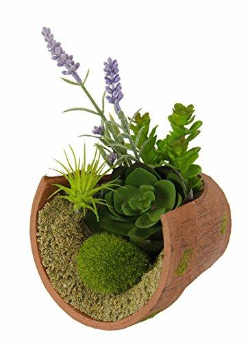 Flair Flower Succulenten im gerissenen Topf, Natur, Kunststoff, grün, 17x11x11 cm
