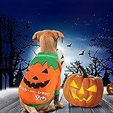 Idepet Disfraz de calabaza para perro, disfraz de perro de forro polar, chaquetas, suéter para gatos, cachorros, chihuahua, vestirse, Halloween, Navidad, Pascua, festival, actividades
