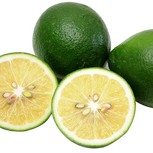 国産 レモン 2kg 佐賀県産 防腐剤不使用 特別栽培農産物 ご家庭用 訳あり