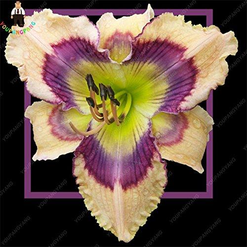 100pcs 20 types d'orchidées Graines vivaces Fleurs Plantes ornementales en pot Bansai Semences pour balcon et cour plante Diy jardin jaune
