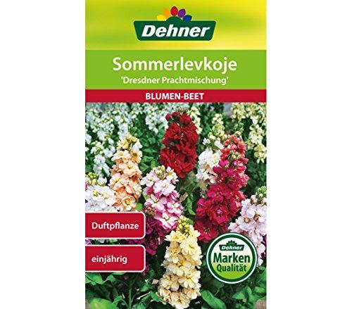 """Dehner Blumen-Saatgut, Sommerlevkoje \""""Dresdner Prachtmischung\"""", 5er Pack (5 x1 g)"""