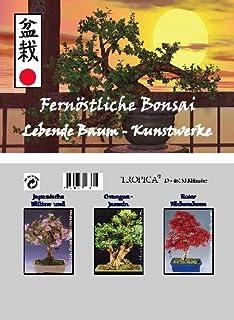 comprar comparacion Mini-invernadero Bonsai extremo oriente con semillas de cereza, naranjas-jazmín y abanico de arce
