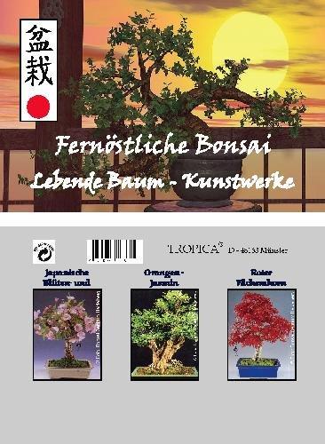 Mini-serre - bonsaï - Asie - avec des graines de cerisier, jasmin-orange et érable japonais