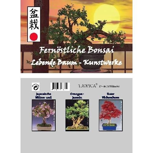 Mini-invernadero Bonsai extremo oriente con semillas de cereza, naranjas-jazmín y abanico