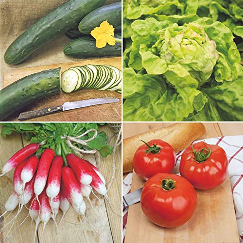 Bio Gemüsepflanzen