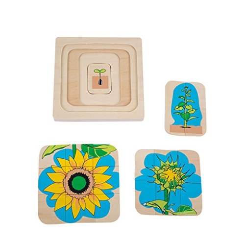 Adena Montessori Life Cycle of Sunflower Montessori Toddler Montessori Early Child Development Learning Material