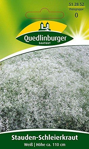 Stauden-Schleierkraut Weiß von Quedlinburger Saatgut