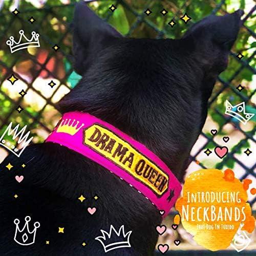 That Dog In Tuxedo Drama Queen Dog Neck Band Collar an Alternative Accessory for Bandana (Small)