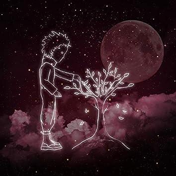 Night Cherry Blossom