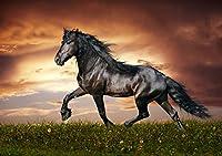 """A4, Poster """"Cavallo nero spedizione entro 24ore di prima classe #1"""