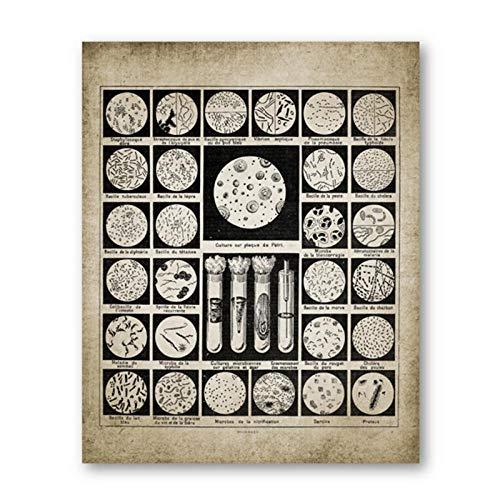 Pôster de micróbios com impressões de bactérias Muzimuzili, biologia, parede, arte, pintura, biologia, ciência, presente, estudante, ciência, laboratório, decoração, 40 x 50 cm, sem moldura