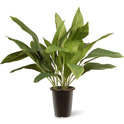 National Tree 30 Inch Garden Accents Green Aspidistra Plant in Black Pot (GAAP30-30G)