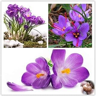 HOT !! - 2 Bulbs True Crocus Saffron Bulbs,Iran Saffron, Bonsai Flower Bulbs Potted Plantt for Home Garden