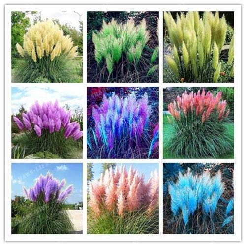 HATCHMATIC Légumes biologiques Betterave Rouge de Betterave Boltardy extérieur Garden Seeds - 20 pcs /