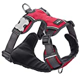 Red Dingo Padded Dog Harness, Small Breeds, Adjustable Fit, Size: Small, Red, S