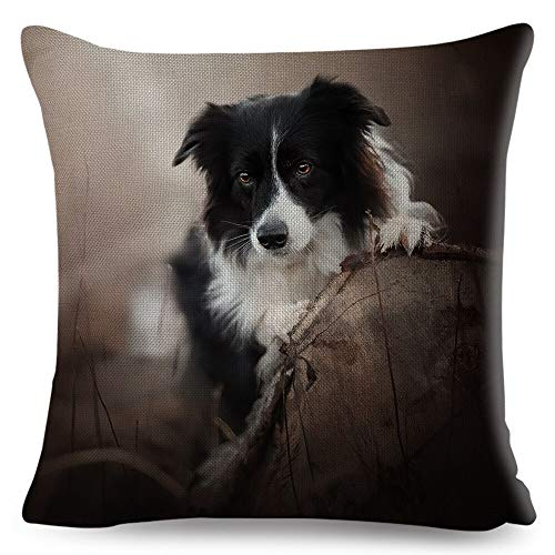 Funda de cojín cuadrada de 45,7 x 45,7 cm, funda de cojín Scotland Border Collie para sofá, hogar, coche, perro, estampado de animales, decoración de almohada para mascotas