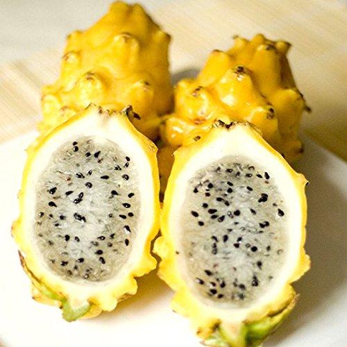 120 Semillas PCS pitaya amarilla Árboles Frutales plantas perennes no GMO Semillas de frutas para Hylocereus Hogar y Jardín fácil de cultivar