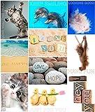 Lot de 50 cartes postales 'Chin Up' - Idéal quand vous voulez transmettre un peu de bonheur et faire sourire (enveloppes non comprises, cartes postales de format C6)
