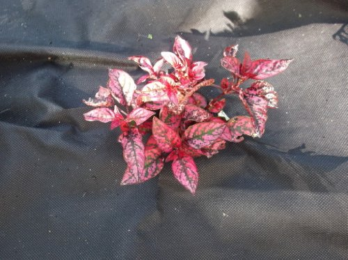 oCean Express Neuf 1.5/3/4.5/6 M X 8m Contrôle Mauvaise Herbe Paysage Jardin Tissu Résistant Rouleaux - 1.5 m x 8 m
