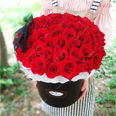 Mixed Seeds Rose, 200 Pcs Rare Bonsai Fleurs Rose, mélanger les couleurs Croissance naturelle Plante en pot pour le jardin Suppies Représentant Amour 11