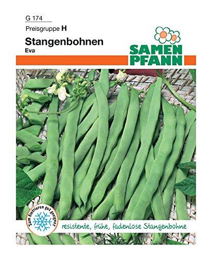 Samen Pfann G174 Stangenbohne Eva (Stangenbohnensamen)