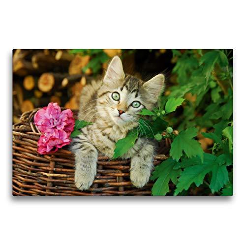 Premium textiel canvas 75 cm x 50 cm dwars, schattig jong katje op een wilgenmand | muurschildering, afbeelding op spieraam, afgewerkt afbeelding op echte wilgenmand (CALVENDO dieren);CALVENDO dieren