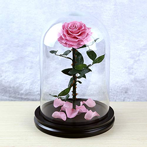 Glas Cover Giant Prins Verf Basis 10 Cm Enkele Rose Valentijnsdag Om Vriendin Stuur