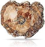 Namvo Pezzo fossile in Legno Naturale Ornamento in Legno pietrificato lucidato Irregolare ...