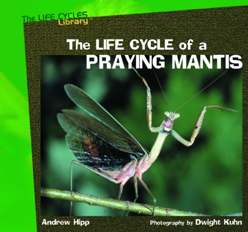 The Life Cycle of a Praying Mantis