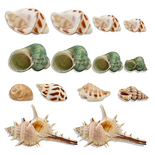 RYPET Hermit Crab Shells 30PCS - Natural Growth Shells for Hermit Crab Variety Turbo Seashells Sea Conch No Painted Hermit Crab Supplies