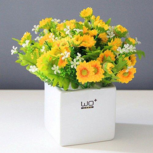 100 graines de marguerite Livingstone Daisy Graines graine fleur jaune variété complète le taux de 95% en herbe Vivaces Plantes 1 pot