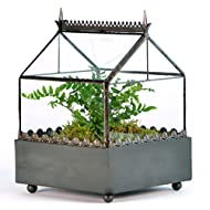 H Potter Glass Terrarium - Handcrafted Square Tabletop Planter Box - Modern Geometric Indoor Display Case - Succulent Container - Miniature Fairy Garden - Home Accent Decor