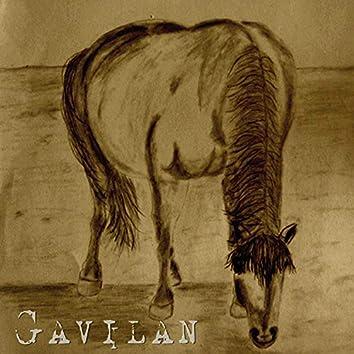 Gavilan EP